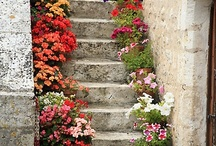 Stairs / Stairs are climbed step by step. ~Turkish Proverb