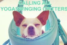 Flying Pets / See contest details here: http://www.yogaswings.com/2013/04/01/omni-gym-pets-contest/