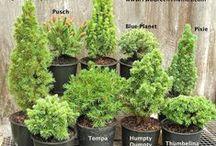 MG… PLANTS