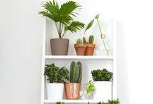 Decor | Plantas