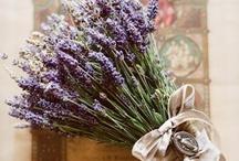 Flowers / by Caroline Ghetes
