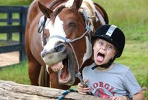"""Just """"Horsing"""" Around!!!! / by Connie Fitzgerald"""