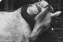 Horses  / by Aija S