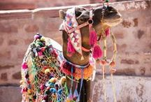 MODERN GYPSY / All things gypsy, colorful and whimsical.
