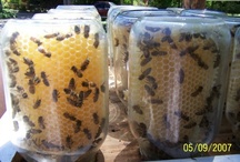 Bee Friendly.