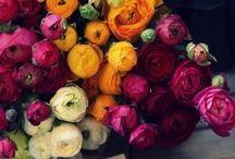 Flowers. / Flowers on flowers on flowers!!!