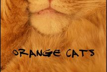 Orange Cats / by Maizelle Morrissey