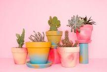 Cactus crazy / Cactus pics tips and crafts! Succulent!