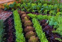How Does Your Garden Grow? / Unique, Innovative, and FUN Ways to Grow Your Garden!   >>>MORE Ways to Enhance Your Home and Life with Herbs and Enjoy Your Garden: http://www.HerbalTreasuresOfHickoryHollow.com