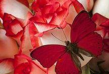 My love of Red / by Barbara Guarnaccia