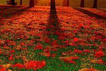Autumn....my favorite / by Barbara Guarnaccia