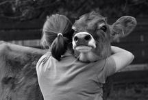 Cow Love / by Megan Hughes
