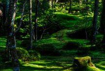 Moss, More Moss Please / Lovable Moss