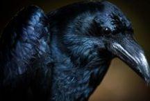 Raven, Prayers to... / by Bubbles Gun