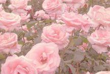 p i n k / pink aesthetic
