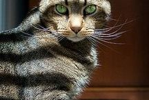 Cat Things / Lovely Images of Cats - Beautiful Things for Cat lovers
