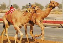 Dubai Travel / Travelling to Dubai
