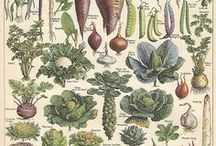 Edible garden / Potager / Köksträdgård / by Karina Brozinic