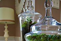 Terrariums / Gardens in a jar
