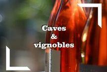 Vins et terroir / Venez goûter les saveurs du Grand Pic Saint-Loup, nos vins et nos produits du terroir.