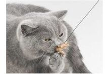 Chats en action - Chat vole ! / Des jouets pour chat et chaton plein d'énergie