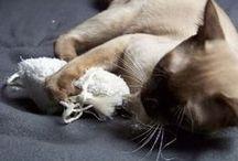 Chats en action - Chat délices ! / Jouets pour chat et chaton remplis de racine de valériane ou de catnip. Quel délice félin !