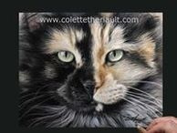 Commissioned Pet Portraits / My photo-realistic portraits are hand crafted using pastels or graphite/charcoal pencils.  Contact me to paint or draw your pet, all animals welcome (fin, feathers, fur and scales)!