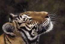 Original Wildlife Artwork