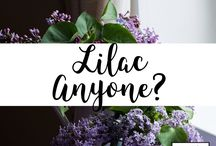 Lilac Anyone? / A broad dedicated totally to lilacs?  What else would you expect from Lydia & Lilac? lydiaandlilac.com