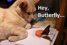 All Butterflies All The Time / Beautiful butterflies