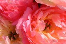 in full bloom / by Lauren Goldberg