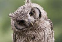 Owl <3 / by Ruska Maglakelidze