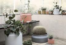 Balcony/Gardens