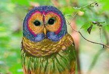 Animals / God's Creative Imagination Amazes Me / by Christie Zemmin
