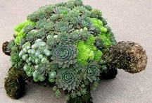 Favorite Plants ! / by Robyn Novak Pervin