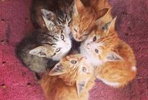 Kitties !! / by Robyn Novak Pervin