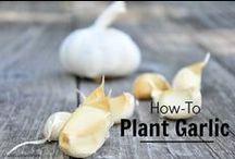 Gardening / Garden How-To