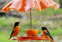 For the birdies.... / by Robyn Novak Pervin
