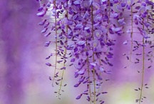 Everything purple, lavender, lilac... / by Robyn Novak Pervin