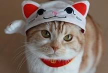 kitties / by (✿◠‿◠) ked (◕‿◕✿)