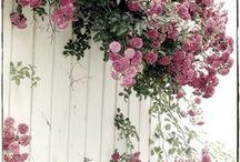 Plantas, flores, jardins e espaços externos / Jardins, varandas e espaços de estar ao ar livre. / by Eliana Zerbinatti