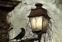 Fall ~ Halloween / by Robyn Novak Pervin