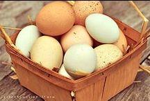 Oh Those Beautiful Eggs!