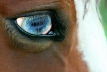Love of Horses / ~Freedom~