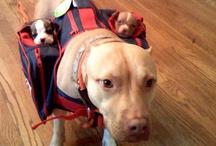 Pups / by Annie Warholm