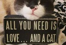 Meow / love all animals but have a soft spot for cats.  / by Jill Nickolas-Stewart
