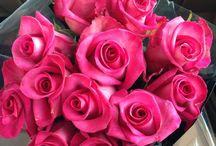 Power Of Flowers :)