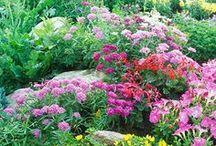 Flowers and garden decor