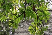 Cottages to Mansions / Architecture