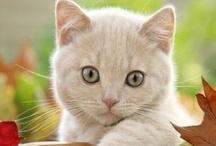 Cat's Me-owww